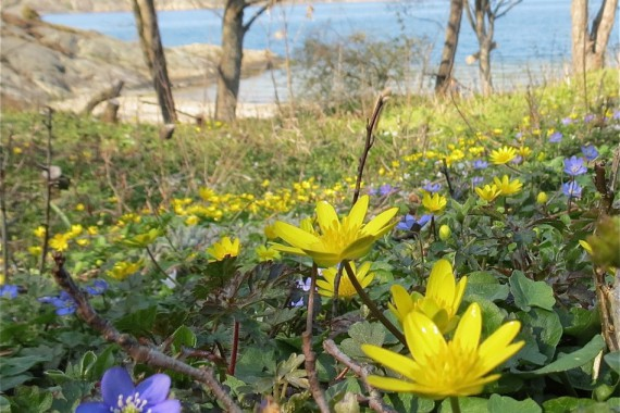 Naturskyddsföreningen vill skydda rara arter i Aleviken