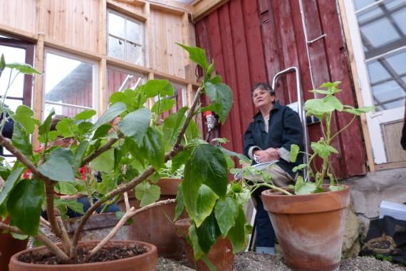 Permaodling hos Ulla Rhedin